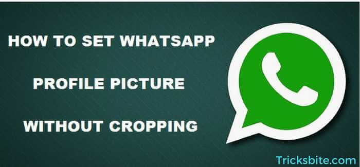 Whatsapp Profile Picture Without Cropping